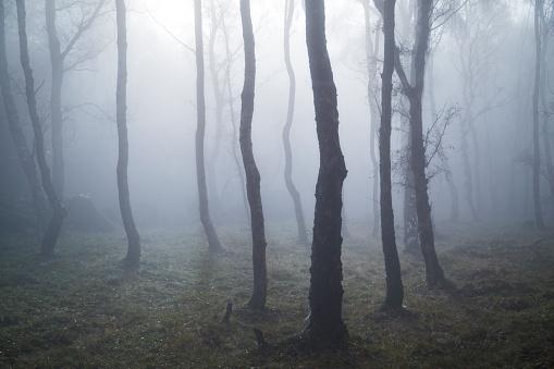 Peak District National Park「Misty woodland, Bolehill Quarry, Peak District, England, UK」:スマホ壁紙(7)