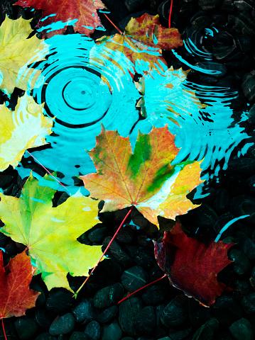 セイヨウカジカエデ「フローティング秋の葉」:スマホ壁紙(10)