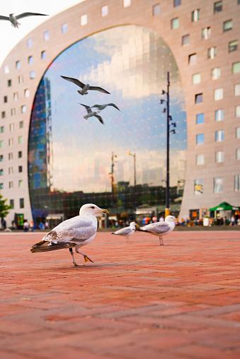 Vibrant Color「Market Hall Rotterdam, Rotterdam, Netherlands」:スマホ壁紙(7)