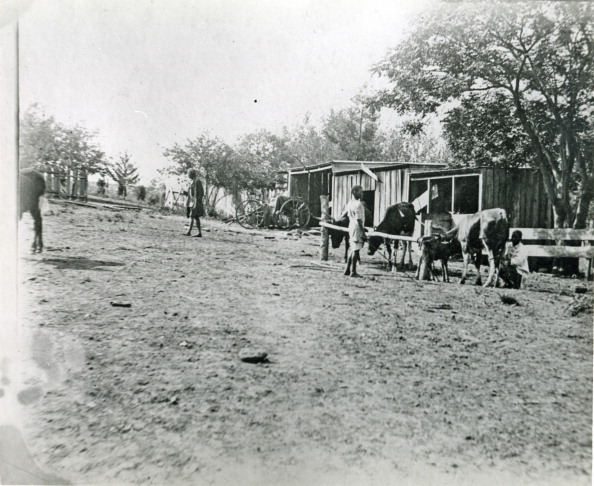 Agriculture「Dairy farming in 1902...」:写真・画像(5)[壁紙.com]