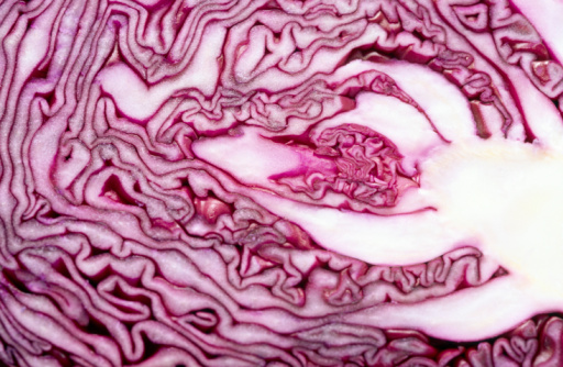Red Cabbage「Cabbage cross-section」:スマホ壁紙(17)