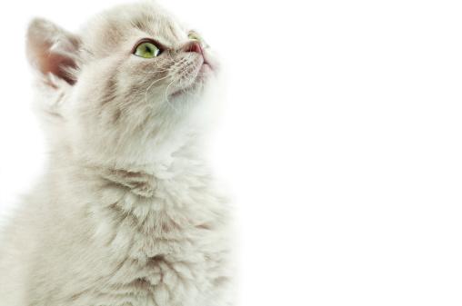 Mixed-Breed Cat「kitty」:スマホ壁紙(9)