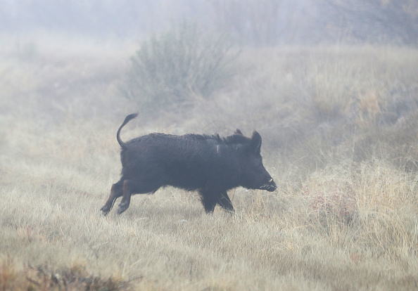 Wild Boar「Border Wall Funding Continues To Be Divisive Issue Prolonging Government Shutdown」:写真・画像(11)[壁紙.com]