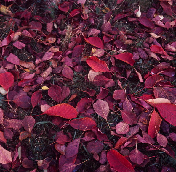 Season「Autumn Leaves」:写真・画像(12)[壁紙.com]