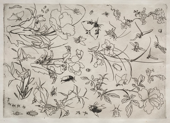 Etching「Dinner Service (Rousseau Service): Flowers And Insects (No. 15)」:写真・画像(18)[壁紙.com]