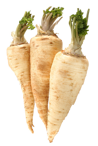 Turnip「Three parsnips in front of white background」:スマホ壁紙(4)