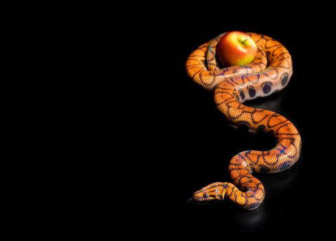 Evil「Rainbow boa constrictor squeezing apple」:スマホ壁紙(12)