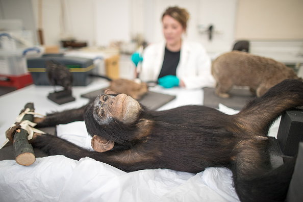 Stuffed「The Grant Museum Undertake Conservation Work On Historic Taxidermy Collection」:写真・画像(10)[壁紙.com]