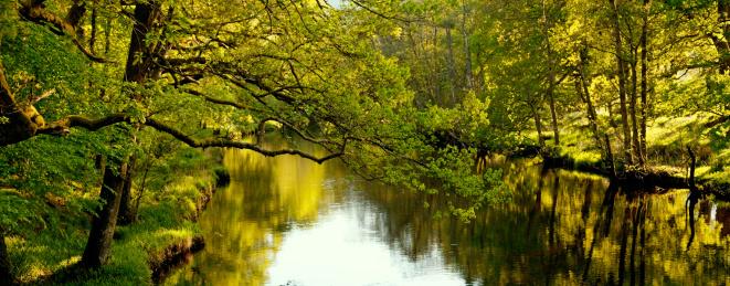 アーン川「Evening sunlight through trees on the Rivel Earn」:スマホ壁紙(3)