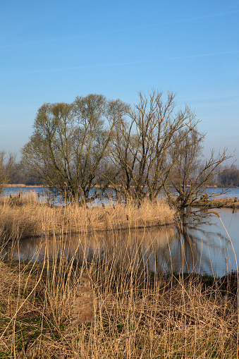 North Brabant「Bank with creek, reed and trees of Dutch river Nieuwe Merwede.」:スマホ壁紙(11)