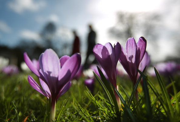 flower「Spring Weather Arrives In The UK」:写真・画像(12)[壁紙.com]