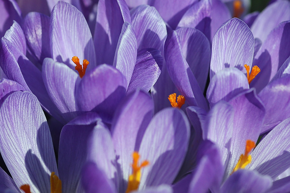 春「The First Signs Of Spring Appear In London」:写真・画像(1)[壁紙.com]