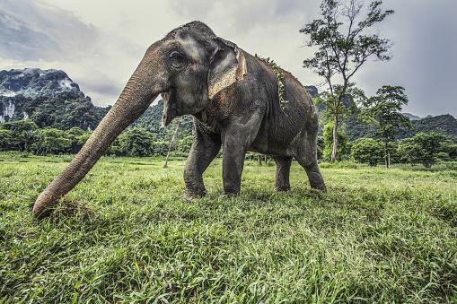 象「Wild elephant in Thailand」:スマホ壁紙(18)