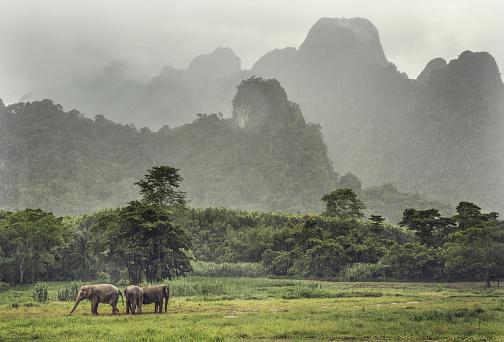 象「Wild elephants in Thailand」:スマホ壁紙(15)