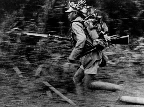Tropical Rainforest「On The Run」:写真・画像(15)[壁紙.com]