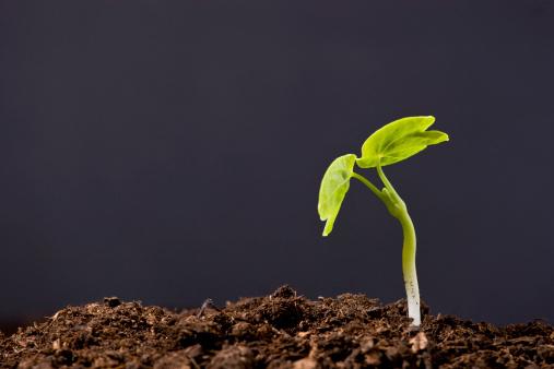 Planting「Plant: dark」:スマホ壁紙(5)