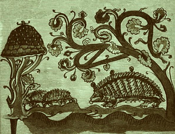 ハリネズミ「Hedgehogs and Mushroom」:写真・画像(13)[壁紙.com]
