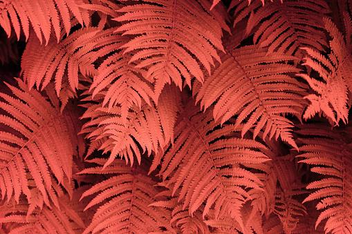 Floral Pattern「Fern Background In Pantone Living Coral Colour」:スマホ壁紙(3)