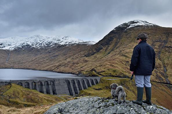 動物「EU Referendum - Scotland's Renewable Energy Market」:写真・画像(14)[壁紙.com]