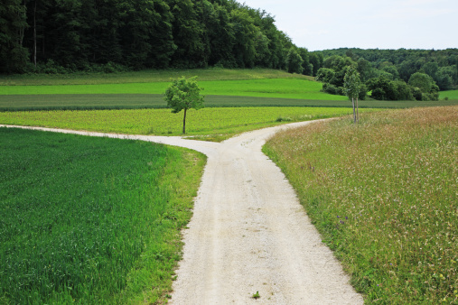Choice「A branch road」:スマホ壁紙(5)