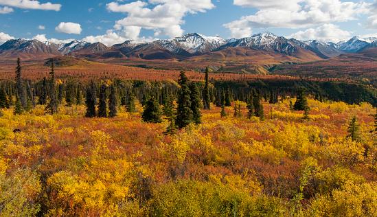 秋「Scenic of autumn tundra, Chugach Mountains, AK.」:スマホ壁紙(13)