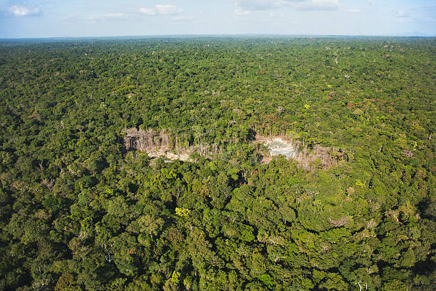 Forest destruction caused by mining gold deposits. Soil is blasted with powerful jets of water, causing chemical pollution which has a major impact on the rain forest environment, Venezuela, South America:スマホ壁紙(壁紙.com)