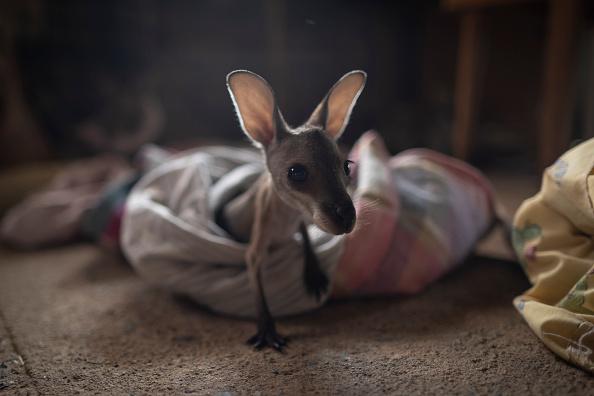Animal Themes「Wytaliba and Torrington Communities Start To Rebuild Following Devastating Bushfires」:写真・画像(11)[壁紙.com]