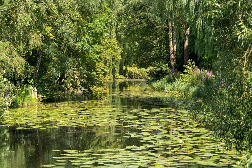 Water Lily「Germany, Moelln, spa park with lily pond」:スマホ壁紙(14)