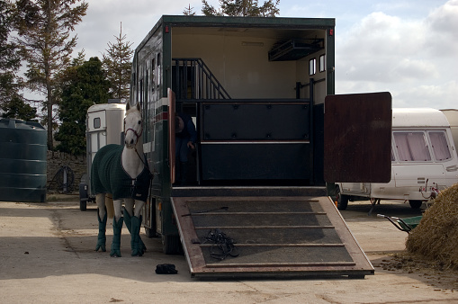 Horse「Horsebox with horse」:スマホ壁紙(12)