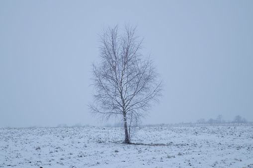 Loneliness「single tree in the middle of a field with snow」:スマホ壁紙(0)