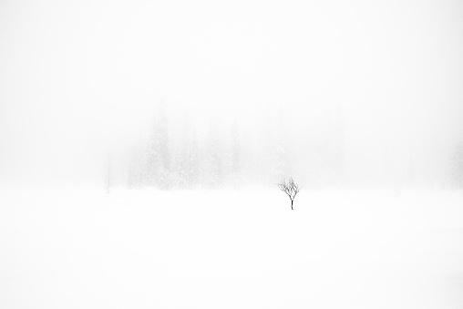 吹雪「Single tree in snow storm」:スマホ壁紙(7)