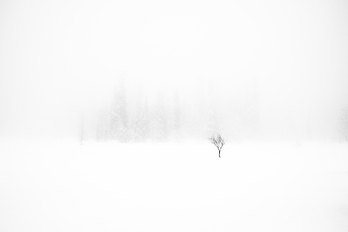 Single Tree「Single tree in snow storm」:スマホ壁紙(1)