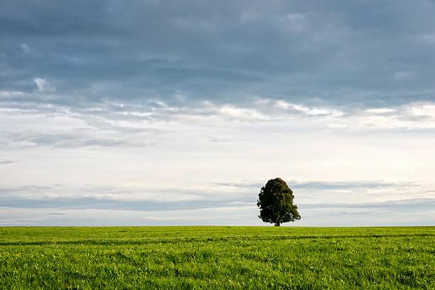 Single tree in a field:スマホ壁紙(壁紙.com)