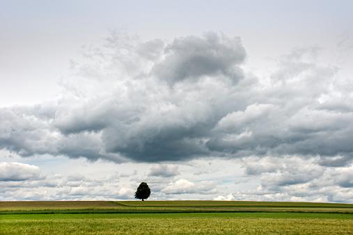 Single Tree「Single tree in a field」:スマホ壁紙(17)