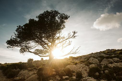 Single Tree「Single Tree, Mallorca, Spain」:スマホ壁紙(16)