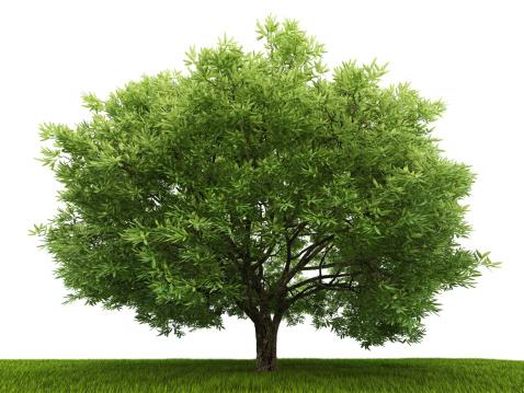 Deciduous tree「Single tree in the field」:スマホ壁紙(16)