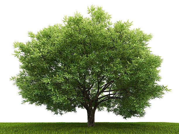 Single tree in the field:スマホ壁紙(壁紙.com)