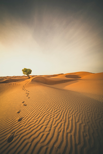 Oman「single tree and foot marks in the desert sand of oman」:スマホ壁紙(17)