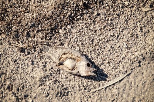 Photoshot「Dead fish」:スマホ壁紙(19)