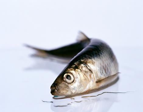 セイヨウカジカエデ「dead fish」:スマホ壁紙(19)