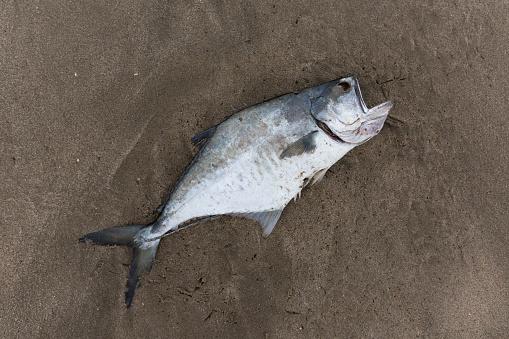 ガラス「Dead Fish」:スマホ壁紙(17)