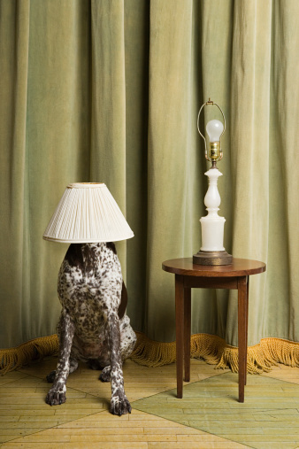 Humor「Dog with a lampshade on its head」:スマホ壁紙(19)