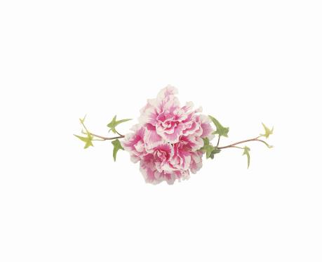 カーネーション「Ivy and Carnations」:スマホ壁紙(17)
