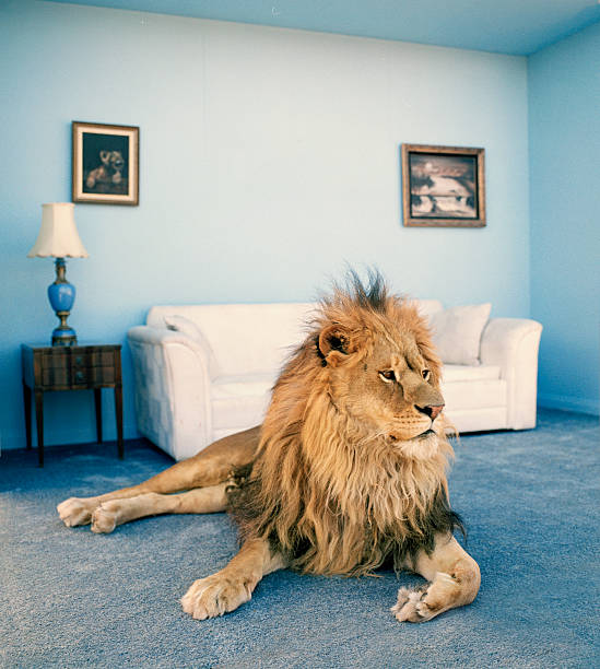 Lion on living room rug:スマホ壁紙(壁紙.com)