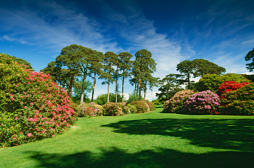 Formal Garden「Trees and formal garden」:スマホ壁紙(3)