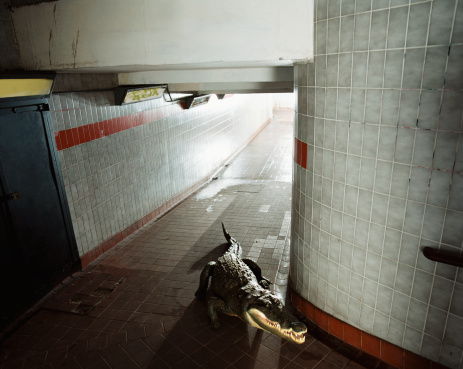 Crawling「Crocodile stalking in an underpass」:スマホ壁紙(8)