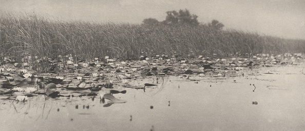 Water Lily「Water-Lilies」:写真・画像(19)[壁紙.com]