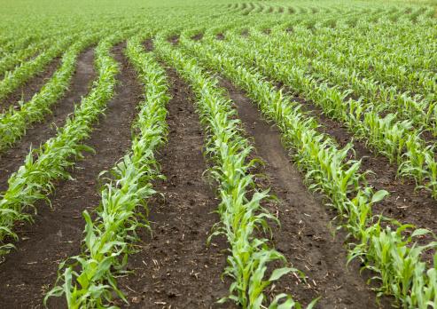 Planting「Curved Rows of Spring Corn」:スマホ壁紙(14)