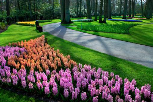 Keukenhof Gardens「Hyacinth Flowers announce spring」:スマホ壁紙(16)