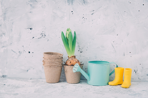 Hyacinth「Hyacinth flower with plant pots, watering can and wellington boots」:スマホ壁紙(19)